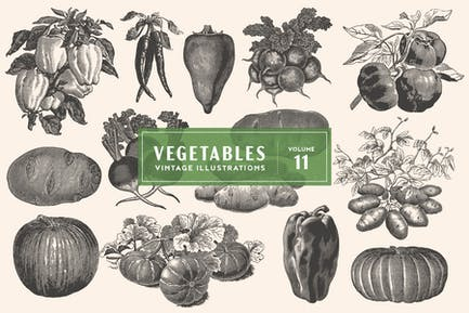 Vintage Vegetable Illustrations Vol. 11