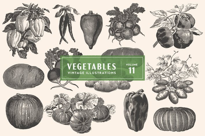 Thumbnail for Vintage Vegetable Illustrations Vol. 11