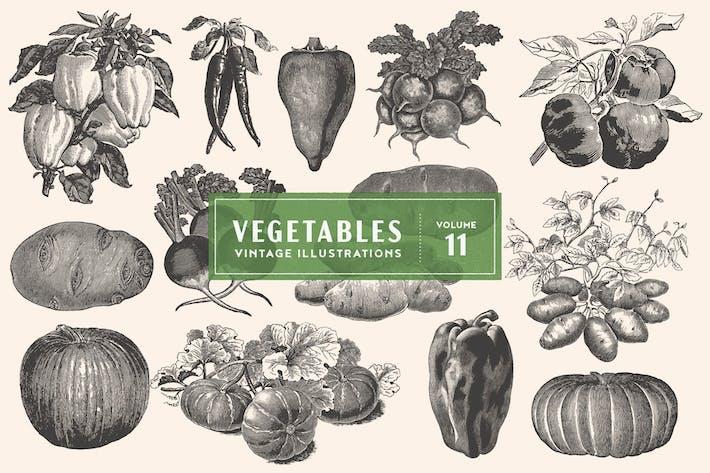 Cover Image For Vintage Vegetable Illustrations Vol. 11