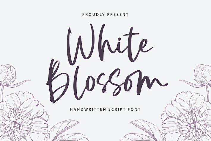 Thumbnail for White Blossom