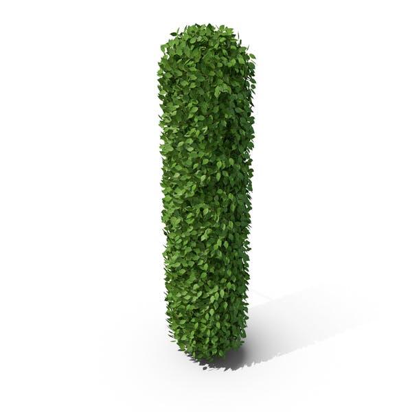 Thumbnail for Hedge Shaped Letter I