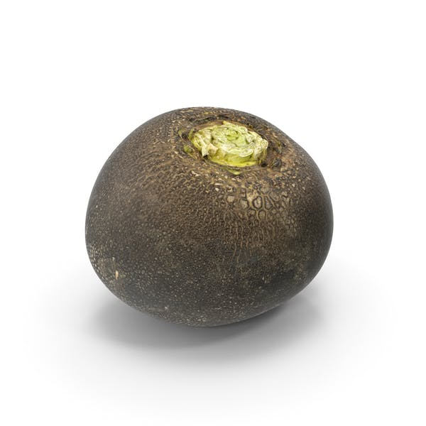 Thumbnail for Black Turnip