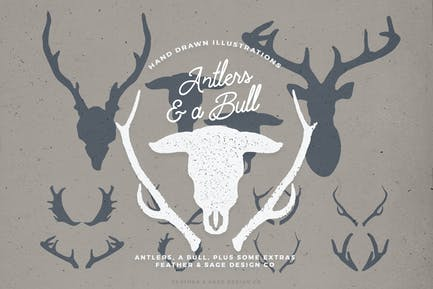 Antlers and a Bull Illustrations