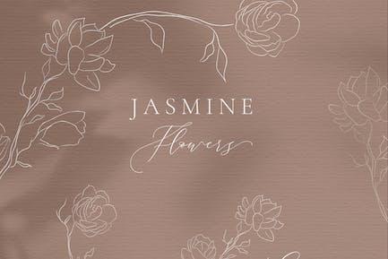 Line drawing White Jasmine Flower illustrations.