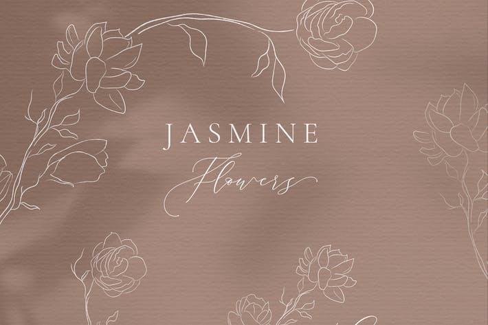 Thumbnail for Line drawing White Jasmine Flower illustrations.