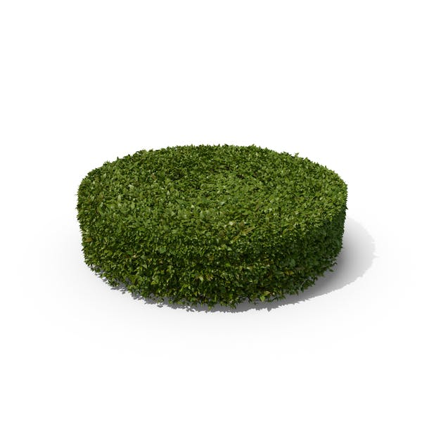 Thumbnail for Cylindrical Hedge Shrub