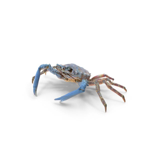 Thumbnail for Decorator Crab