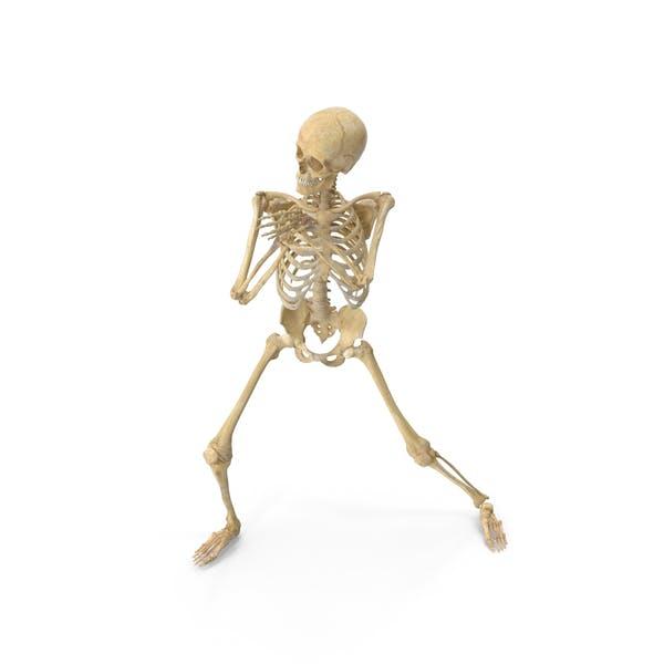 Thumbnail for Real Human Female Skeleton Pose