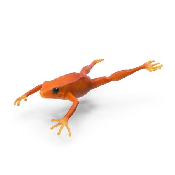Mantella Frog