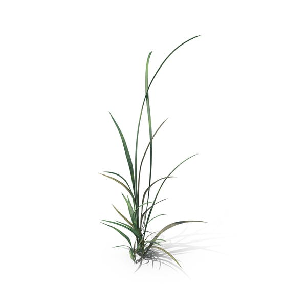 Cover Image for Simple Grass