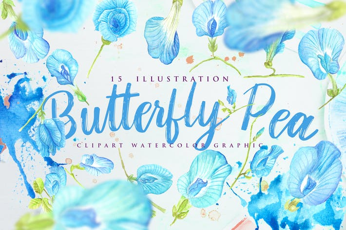 Thumbnail for 15 Watercolor Butterfly Pea Flower Illustration