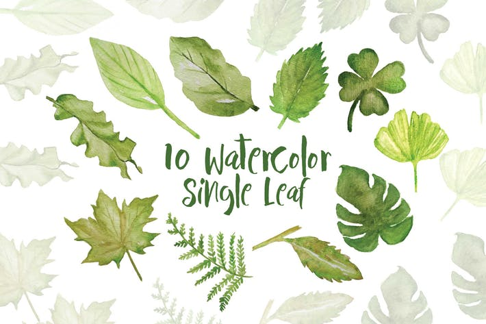 Thumbnail for 10 Watercolor Single Leaf Illustration