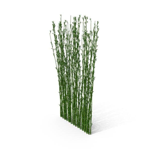 Thumbnail for Bambú