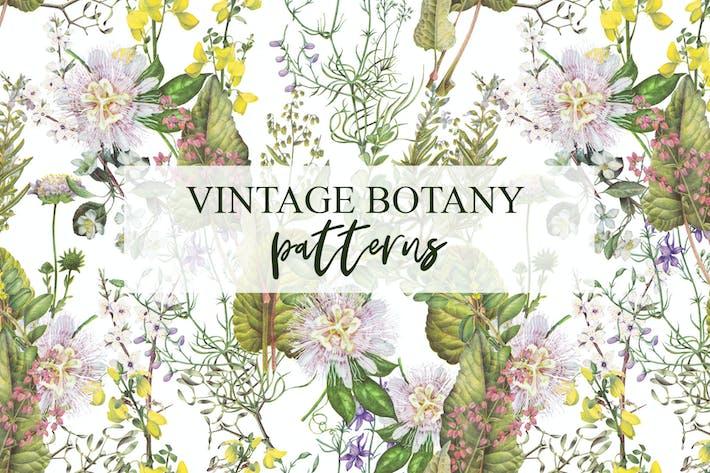 Thumbnail for Botanical plants, vegetables, mushrooms patterns