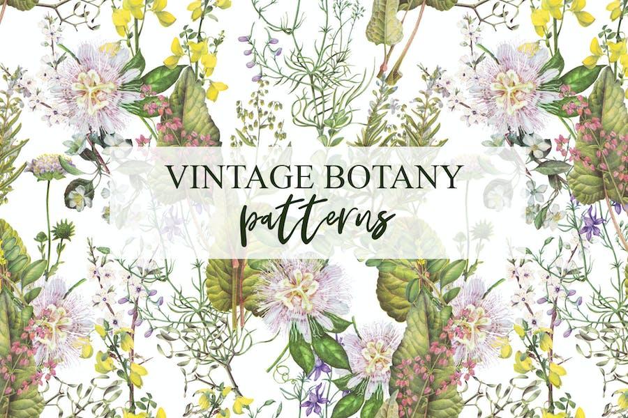 Botanical plants, vegetables, mushrooms patterns