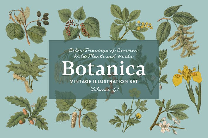 Thumbnail for Botanica Vol. 1 - Vintage Plants Illustrations