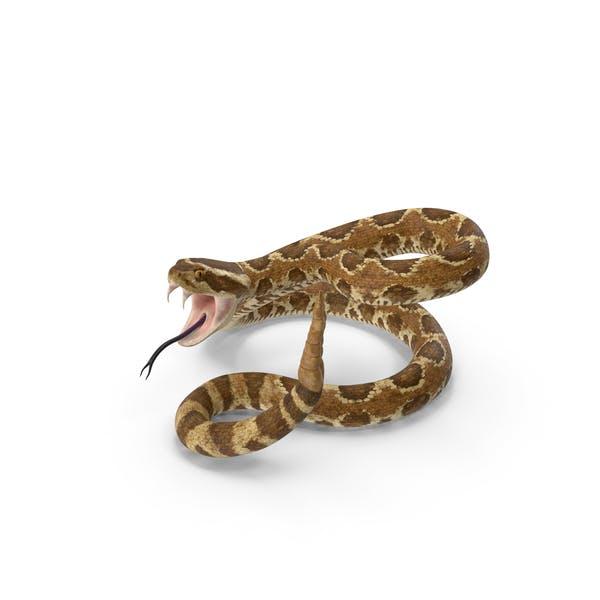 Light Rattlesnake Attack Pose
