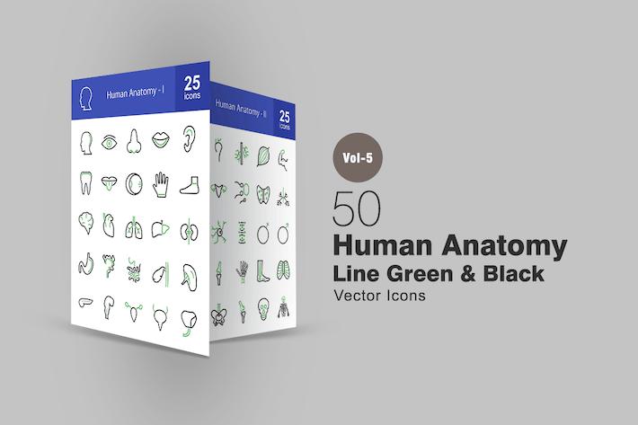 50 menschliche Anatomie Linie Grün & Schwarz Icons