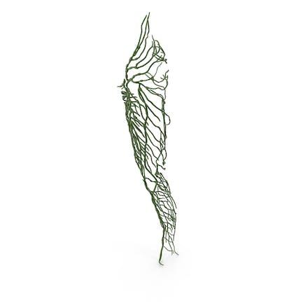 Lymphsystem des menschlichen Beins