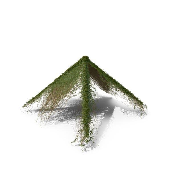 Efeu Dachform