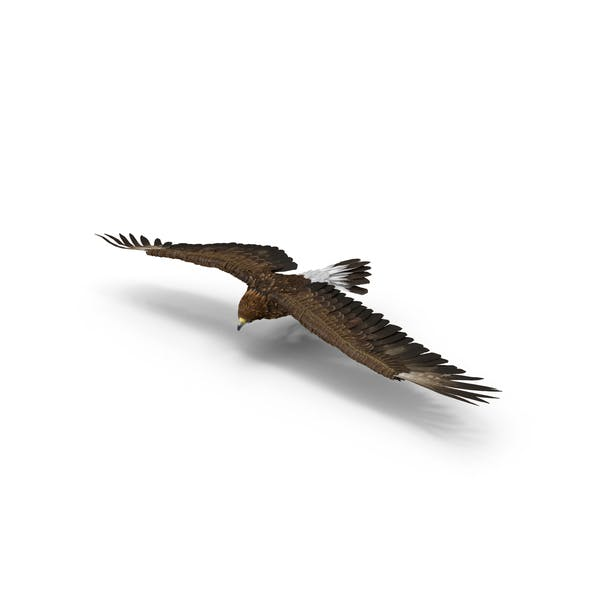 Golden Eagle Turning
