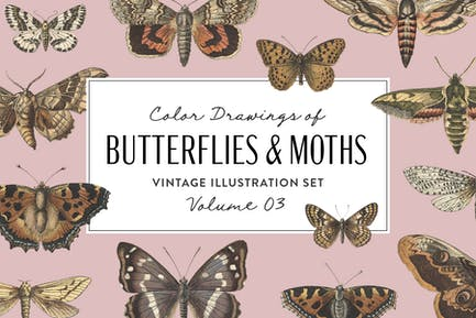 Butterflies & Moths Vintage Graphics Vol. 3