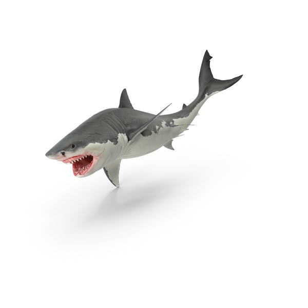 Thumbnail for Great White Shark
