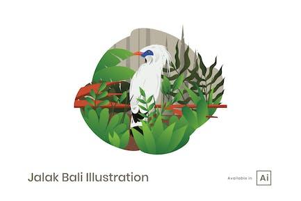 Jalak Bali Illustration