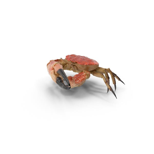 Cover Image for Queen Crab