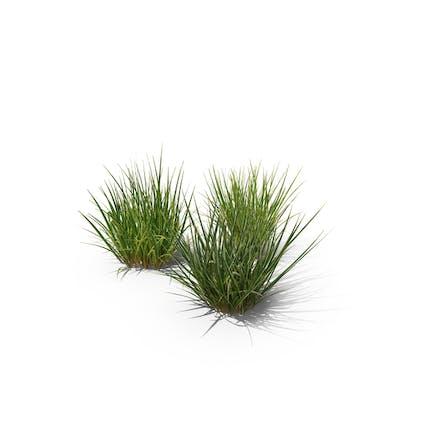 Purple Moor-Grass