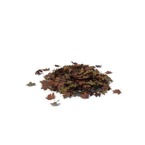 Thumbnail for Pila de hojas de arce