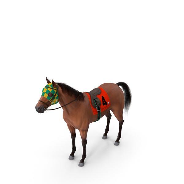Bay Racing Horse Fur