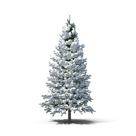 Immergrüner Baum mit Schnee bedeckt