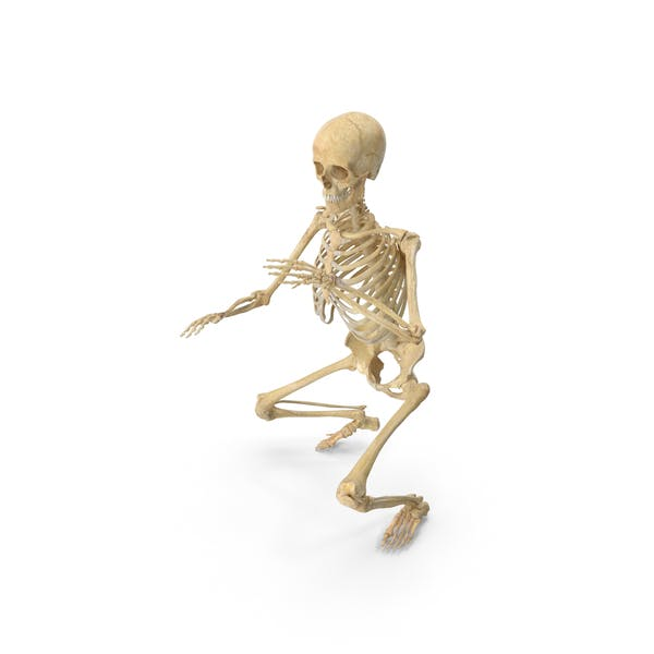 Thumbnail for Real Human Female Skeleton Pose