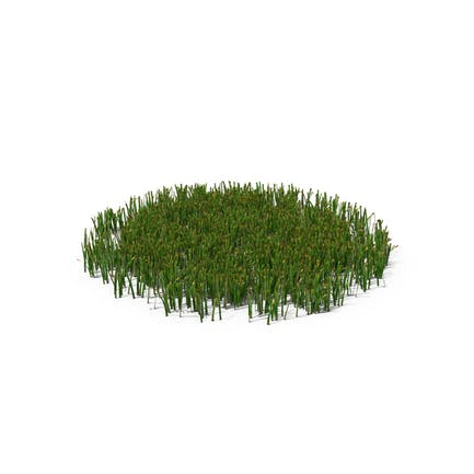 Einfaches Gras Medium