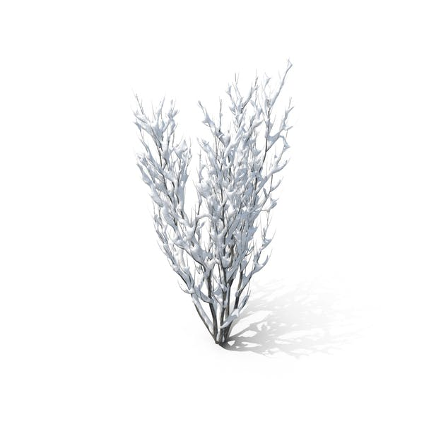 Winter Bush