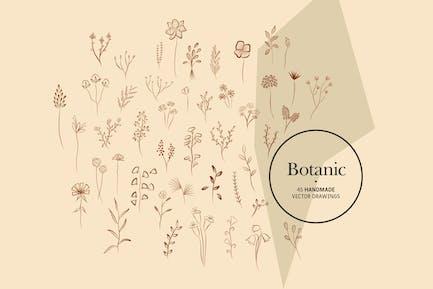 Botanique - Dessins Vecteur faits à la main