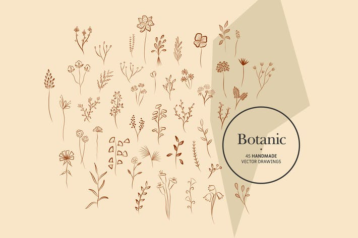 Thumbnail for Botanic - Handmade Vector Drawings