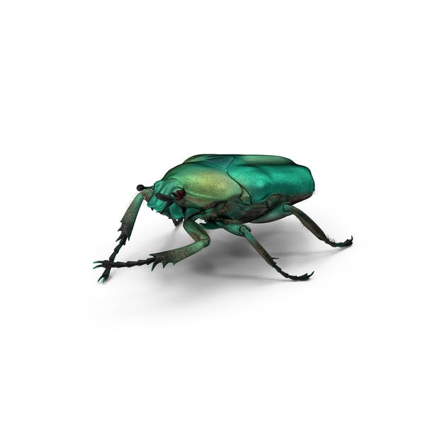 Thumbnail for Green Scarab Beetle