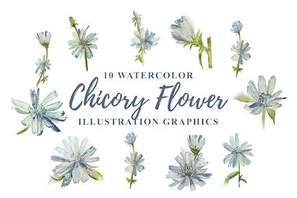 10 Aquarell Chicorée Blume Illustration Grafiken