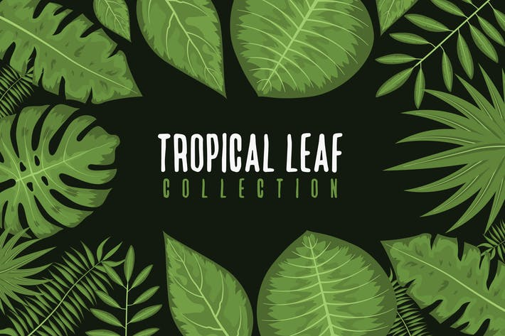 Thumbnail for Tropical  Leaf Collection