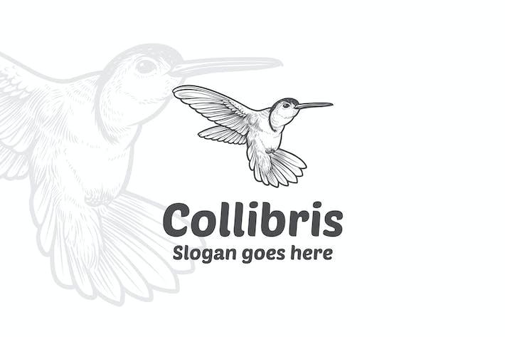 Collibri Bird Vector Logo Mascot