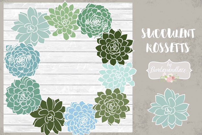 Thumbnail for Vector succulent rosettes