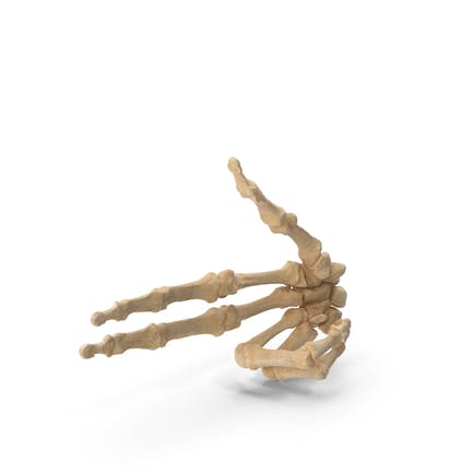 Skeletal Gun Sign