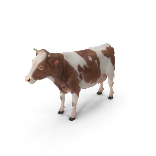 Cow with Fur