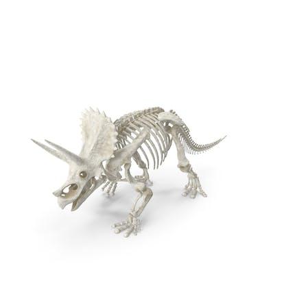 Triceratops Horridus Skeleton Walking Pose