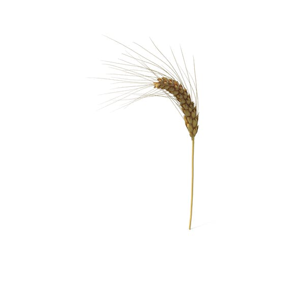 Wheat Branch