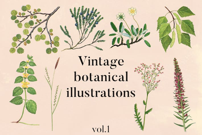 Thumbnail for Vintage botanische Illustrationen Vol.1