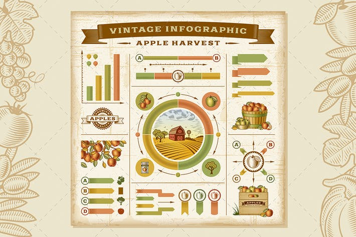 Thumbnail for Vintage Apple Harvest Infographic Set