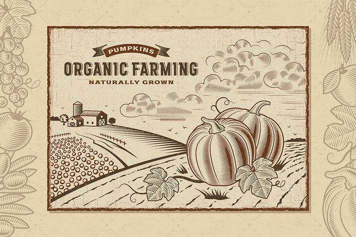 Thumbnail for Pumpkin Organic Farming Landscape